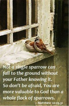Not a single sparrow can fall to the ground without your Father knowing it. So don't be afraid, you are more valuable to God than a whole flock of sparrows. THANK YOU LORD! Scripture Verses, Bible Scriptures, Bible Quotes, Scripture Pictures, Matthew 10 29, Bird Art, Belle Photo, Word Of God, Thy Word