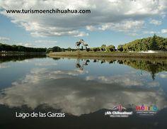 PASEA POR CHIHUAHUA Guachochi es un lugar turístico en Chihuahua que ofrece al turista que nos visita la posibilidad de realizar paseos en lancha a lo largo del lago, así como la práctica de la pesca en temporadas aptas para ésta. Cuenta con un corredor alrededor y en el centro una escultura emblemática del municipio de Guachochi, representada por dos garzas de bronce con más de 3 metros de altura. No dejes de visitarlo en tu próximo viaje a este hermoso estado. #turismoenchihuahua…