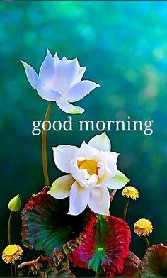 Good morning c'est aussi représentatif de la gentillesse et de la joie de vivre du Tibet et des tibétains, avec la pureté du lotus.