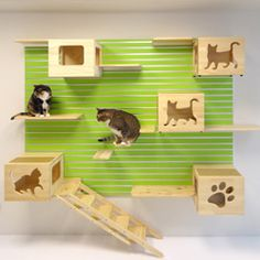 UHHH I NEED THIS -- This is amazing. This company manufactures modular pieces so you can create your own climbing wall for your kitty! So clever...modular and easy to add on or rearrange. System includes boxes for lounging & hiding, shelves for perching, and even a ladder for kittens or older cats.