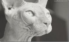 Gatos feos y estos... - http://www.leanoticias.com/2013/01/14/gatos-feos-y-estos/