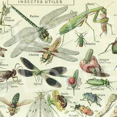 1908 Old insects print bugs antique illustration by annelondez1, $14.90