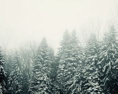 Fog and snow set a wintery mood. You can see more of my tree photographs here http://etsy.me/17FaKV6 and my landscape photographs here http://etsy.me/13OMVge    TITLE: Ever Green  MEDIUM: Fine art print (unframed)  PRINT SIZES: 8x10, 11x14, 12x16, 16x20, 20x24  ORIENTATION: Horizontal    OPTIONS  ➤ Buy a large poster print: http://etsy.me/1ldA41W  ➤ Buy this on canvas: http://etsy.me/1oVBRbI  ➤ Buy it framed: http://etsy.me/1RQddpY  ➤ Save on multiple prints: http://etsy.me/14tsXXU    SEE…