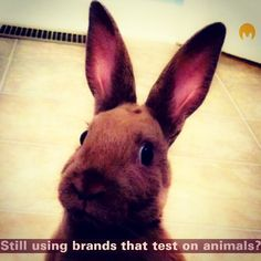 Here are the major brands that TEST ON ANIMALS:  Cosmetics and Haircare Avon Bobbi Brown Covergirl Estée Lauder Head & Shoulders L'Oréal M.A.C. Cosmetics Mary Kay Maybelline Pantene Revlon stila TRESemmé  Self-Care Products Almay Aquafresh Aveeno Caress ChapStick Clean & Clear Coppertone Dove Johnson & Johnson Kiehl's Listerine Old Spice Pampers Secret St. Ives Vaseline  Vicks  Household Products Arm & Hammer Clorox Comet Febreze Glade  Lysol Tide Windex