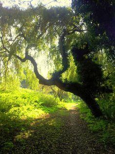 #łScieżka przez las#Piękne miejsca