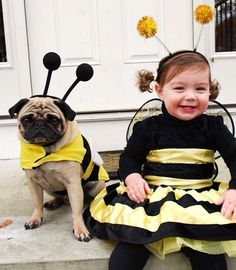 Bumble Bees | Pug  Trick or Treat Bee Girl