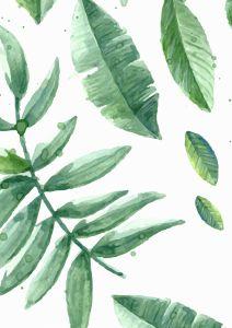 Poster botanico                                                                                                                                                                                 Mais