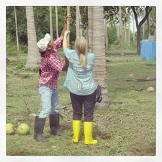 coconut picking. with some professional help.