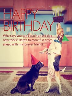 "To my Forever Friend - Happy Birthday Card: Do these two furry pals remind you of you and your best bud? Then this is the perfect birthday card to send them! A pair of cute pooches prove that sometimes you can ""teach an old dog new tricks!"" While one looks on patiently, the other balances a brightly lit birthday cake on his snout, reminding us all that no matter how many candles there are on your cake, if you've got good friends by your side, you'll feel young ""fur-ever""!"