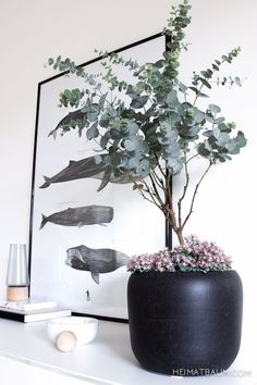 Plants & Flowers {Urban Jungle Bloggers} - HEIMATBAUM