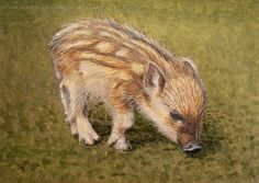 Boar Piglet Mini Painting, Acrylic on Canvas Board, Realism