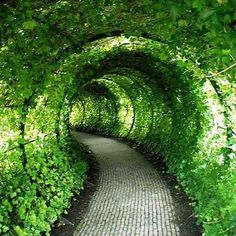 Image result for garden tunnels magical