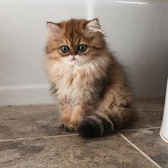 http://postris.com/list/306/20-Pics-of-Cute-Cats-That-Will-Melt-Your-Heart/