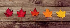 60 Breathtaking Fall Images For Your Inspiration - The Photo Argus Fall Cover Photos, Fall Facebook Cover Photos, Fall Images, Fall Pictures, Timeline Covers, Fb Covers, Fall Banner, Facebook Banner, Cover Pages