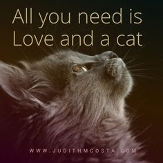 Judith specializes in helping her clients have a better relationship with themselves, transforming their lives. Past Life Regression, Best Relationship, All You Need Is Love, Dreaming Of You, Relationships, Cats, Funny, Gatos, Kitty Cats
