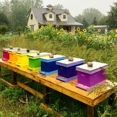 There is nothing better than a rainbow of queen rearing nucs! Insect Hotel, Bee Farm, Bee Hives, Mini Farm, Outdoor Furniture Sets, Outdoor Decor, Save The Bees, Beekeeping, Edible Garden