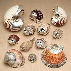 "286 Likes, 11 Comments - coyote negro (@coyotenegro) on Instagram: ""Silver coated seashells """