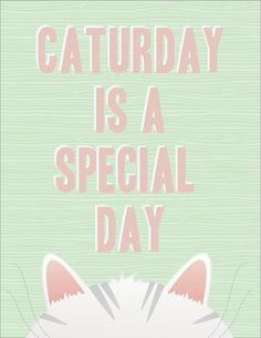 Caturday is a special day!