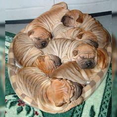 Cinnamon rolls. Cute Sleeping Puppies.