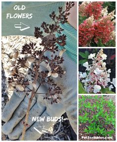 Liatris spicata Floristan violett-Gay plume Usine de 9 Cm Pots