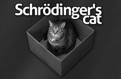 El gato de Schrödinger | LasdosCastillas.net