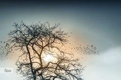 """""""Dreamland series""""  .... """"Önce hayaller vardı sonra kuş sürüsü"""" by hayalci"""