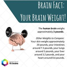 #Brain #Fact of the Day! #health #fun