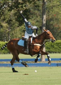 Polo Pony & Full Swing