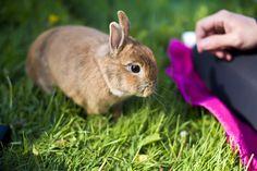 Stefan, the bunny  <3
