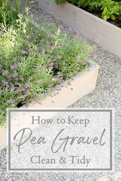 How to keep pea gravel clean!#peagravel #tips #hacks #gardening #gardeningtips #landscaping
