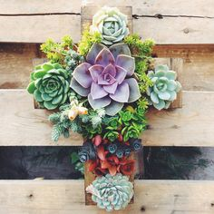 This listing is for a custom made CROSS planter. The dimensions are 12 x Filled with a colorful variety of succulents that will brighten