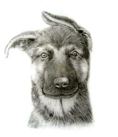 german shepherd puppy dog pencil drawing Dog Pencil Drawing, Puppy Drawing, Pencil Drawings, German Shepherd Puppies, German Shepherds, Easy Drawings, Dogs And Puppies, Horses, Animals