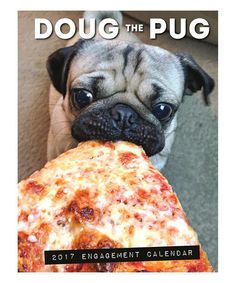 Loving this 'Doug the Pug' 2017 Engagement Calendar on #zulily! #zulilyfinds