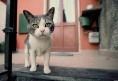 A cat in Italy. By Mitsuaki Iwago.