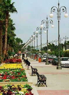 Palm trees (Finikoudes) promenade.. Larnaca, Cyprus