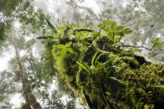 Rainforest tree trunk with epiphytes