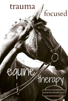 trauma focused equine therapy...my dream...equine assisted therapy
