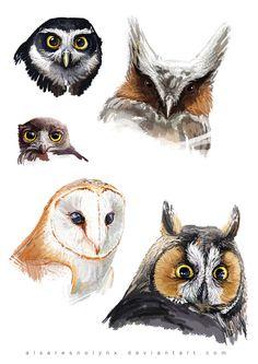Sketch dump - #Owl by AlsaresNoLynx.deviantart.com on @deviantART #Art #Artwork #Owls ::)
