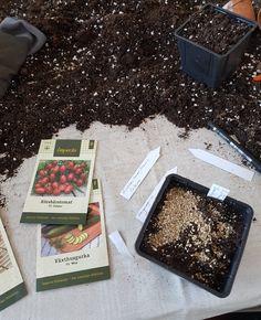 Litt sent ute med å så tomater? How To Dry Basil, Herbs, Herb