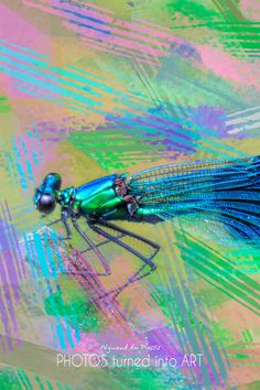 Bird Art / Butterfly Art - printed on STRETCHED CANVAS & embellished with clear matt texture to enhance the original digital brush strokes. DIGITAL BIRD ART Dragonfly Photos, Dragonfly Art, Butterfly Art, Wall Art Prints, Fine Art Prints, Photo To Art, Art Prints Online, Bird Artwork, Abstract Photos