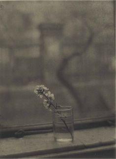 Josef Sudek, Vintage Art, Bouquet, Prints, Photography, Painting, Instagram, Depressed, Joseph