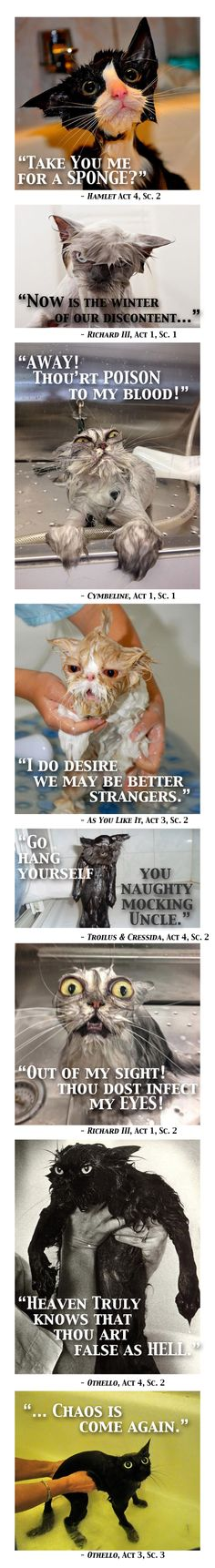 """Pinner says, """"I was imagining what cats would say, if they spoke in Shakespearean verse (Based on """"22 Hilarious Wet Cats"""" from LittleWhiteLion.com). Yep, quotes are taken out of context. So sueth me."""""""
