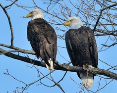 Two Eagles by snooker2009, via Flickr