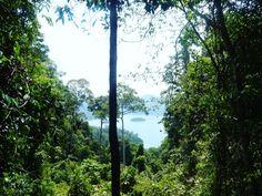 Khao sok jungle