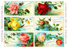 Stollwerk'sche Chocolade Rose Cards – Wings of Whimsy