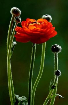 If a flower could sing what would be its song?