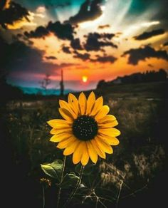 Ideas summer nature photography flowers peace for 2019 Sunflower Iphone Wallpaper, Flower Phone Wallpaper, Iphone Background Wallpaper, Aesthetic Iphone Wallpaper, Nature Wallpaper, Aesthetic Wallpapers, Nature Photography Flowers, Flowers Nature, Sunflower Photography