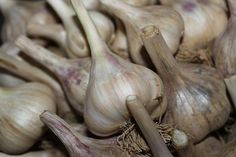 How To Plant Garlic And Onions This Fall - At a time when most of us here in the Midwest are in the process of harvesting the last of our summer vegetables – it…