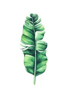 groupaquarelle botanical aquarelle aquarell monstera abbanana desenio posters leaves poster banana prints 10071 Poster Banana Leaf Aquarelle Poster in the group Posters Prints Botanical at Desenio AB can find Aquarelle and more on our website Desenio Posters, Gold Poster, Groups Poster, Plant Painting, Body Painting, Leaf Drawing, Galaxy Painting, Tropical Art, Watercolor Leaves