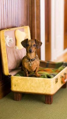 Turn old suitcase into pet bed